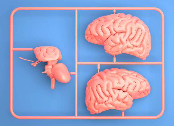 Model kit set with pink brain parts. stock photo