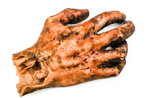 Model of a human hand, after being blown off by a bomb, as used for military training for disaster situations stock photo