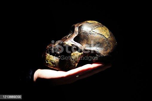 Model of human ancestor skull (Australopithecus afarensis) on a hand. Dark background.