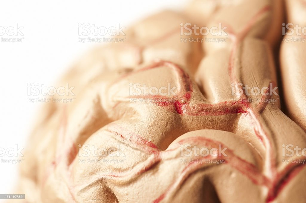Model of the human brain, cropped with selective focus royalty-free stock photo