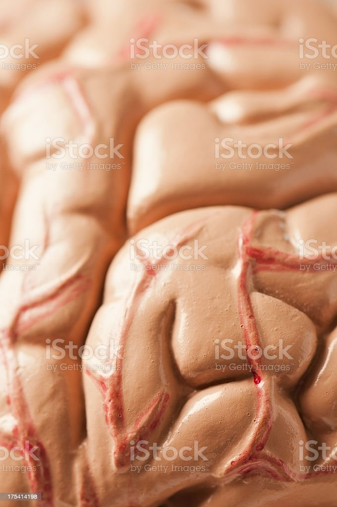 Model of the human brain with blood vessels and tissue royalty-free stock photo