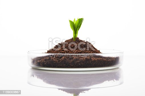 Close up of fresh sprout growing in dirt inside of lab glassware, on white
