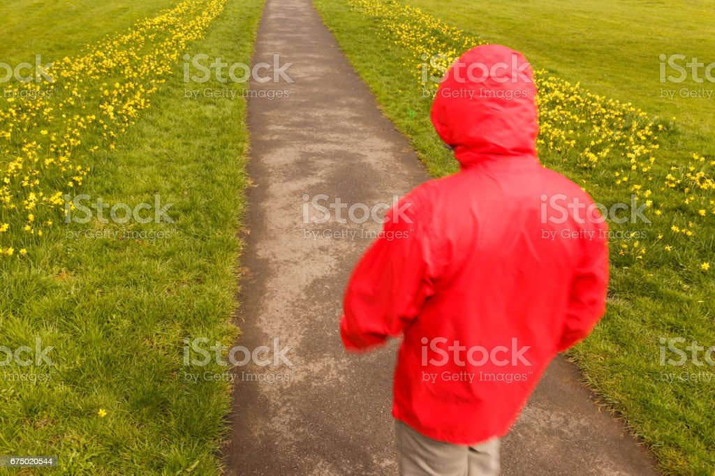 Model released image of unrecognisable man walking along path lined with grass and yellow daffodils in Spring in Britain. stock photo