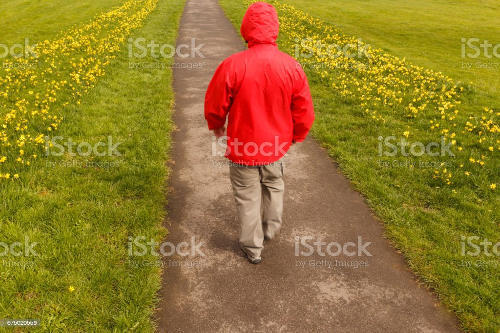 Model released image of unrecognisable man wearing red rain jacket walking along path lined with grass and yellow daffodils in Spring in Britain. stock photo