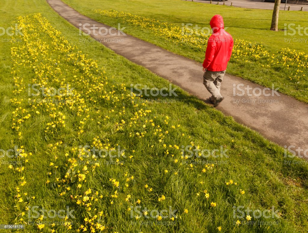 Model released, unrecognisable male hiker wearing red rain cagoule jacket walking along public pathway in Spring, in Britain. stock photo