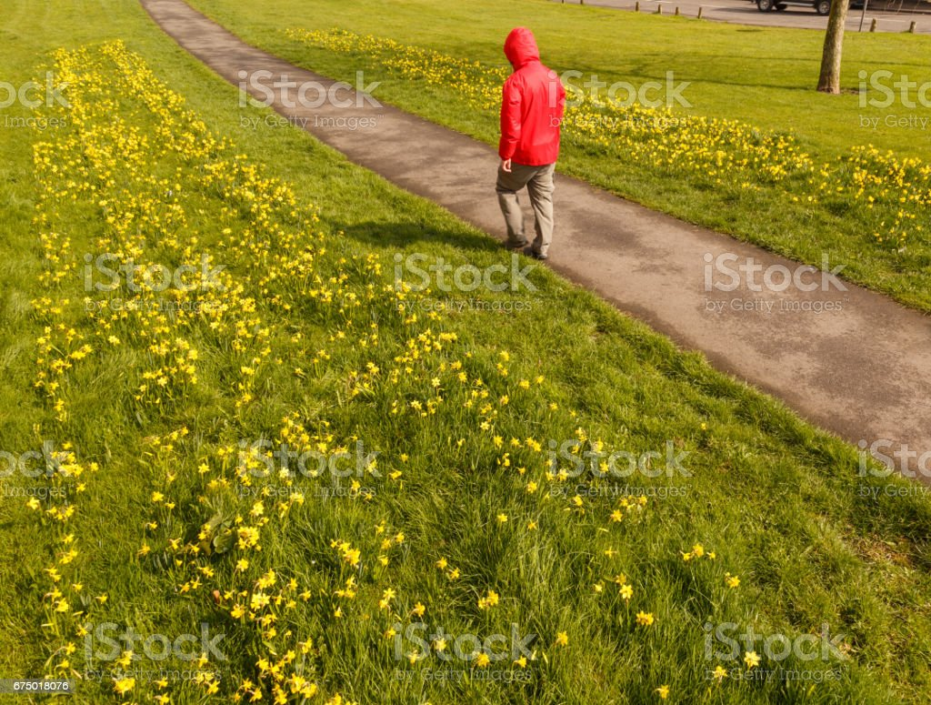 Model released, unrecognisable male hiker wearing red waterproof jacket walking along public pathway in Spring, in Britain. stock photo