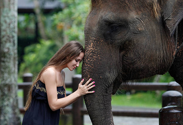 Model woman hugging a big elephant stock photo