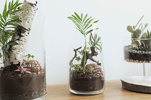 Plant In Glazen Pot.Modern En Uniek Diy Glazen Pot Terrarium Concept Van Natuurlijke Tuin Met Groene Plant Binnen Stockfoto En Meer Beelden Van Begrippen