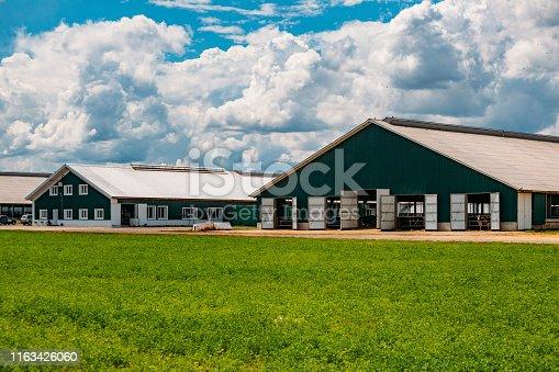 Modern barns at diary farm.