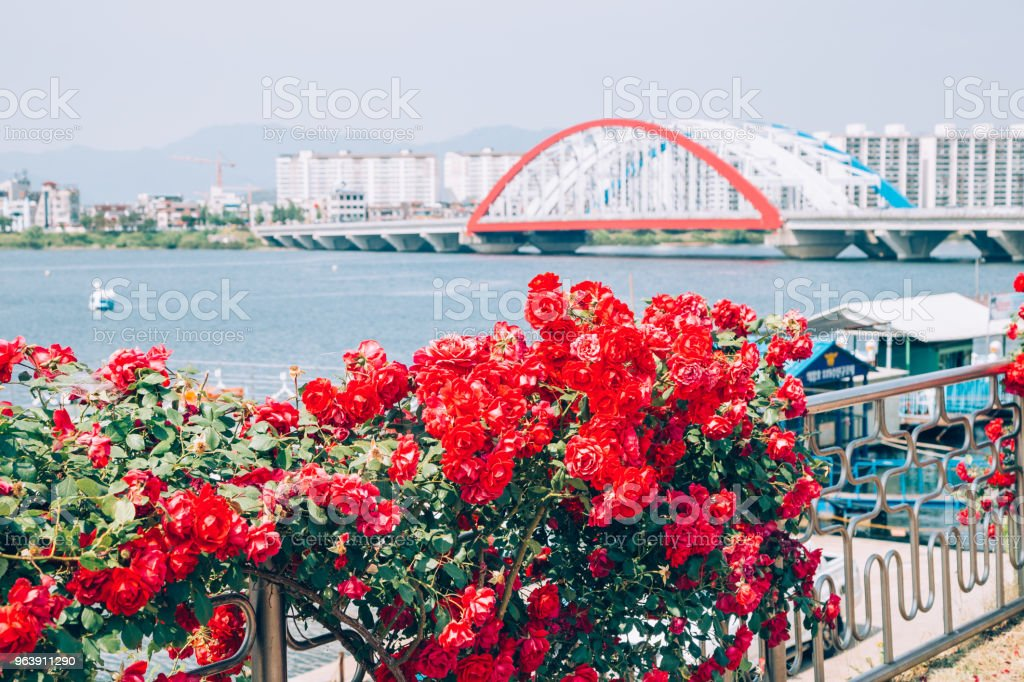 Modern bridge and apartment with red flower on riverside park in Chuncheon, Korea - Royalty-free Apartment Stock Photo