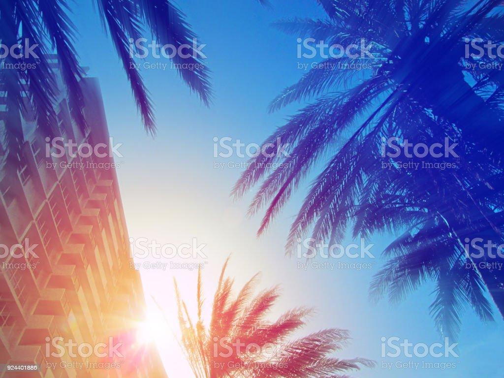 美國佛羅里達州邁阿密的現代建築和棕櫚樹。 - 免版稅佛羅里達州 - 美國圖庫照片