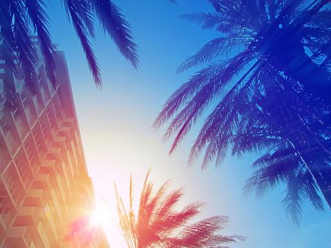 美國佛羅里達州邁阿密的現代建築和棕櫚樹 照片檔及更多 佛羅里達州 - 美國 照片