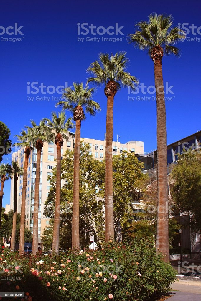 Modern California office hotel complex and palm trees royalty-free stock photo