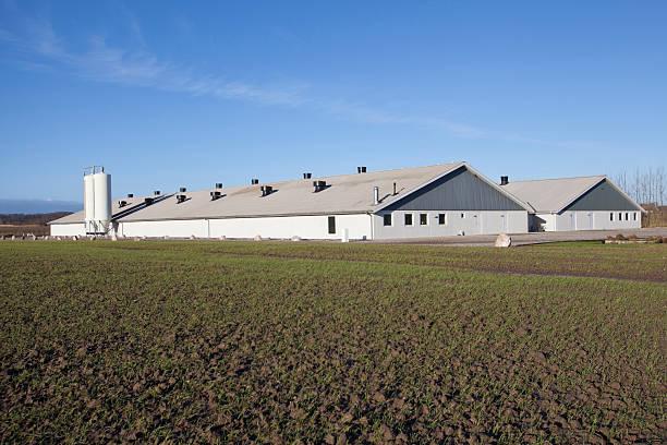 Modern chicken farm stock photo