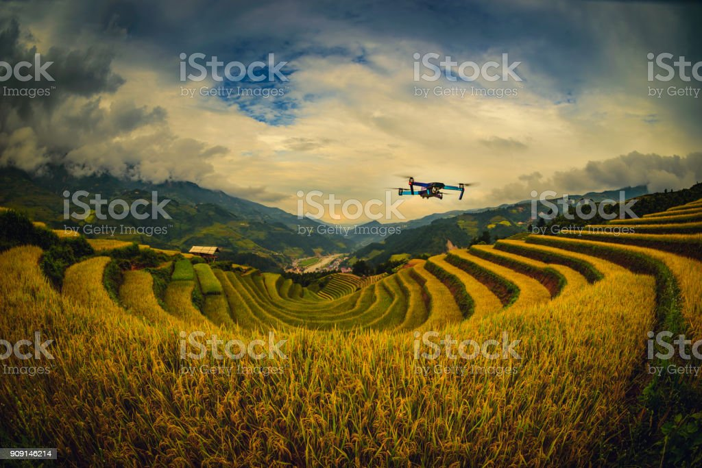 Modern Drone with camera flying on rice fields terraced at sunset in Mu Cang Chai, YenBai, Vietnam. stock photo