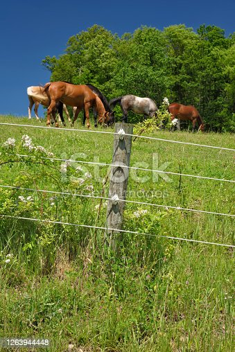 Modern electric farm fencing and post around a summer horse pasture.