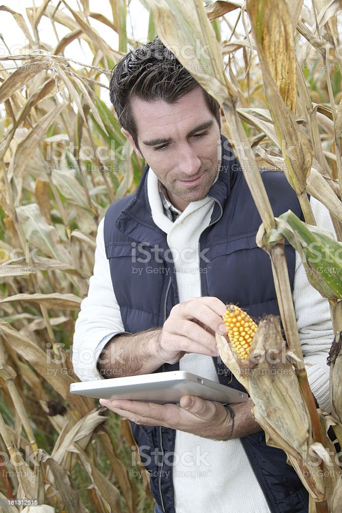 Modern farmer checking corn with electronic tools royalty-free stock photo