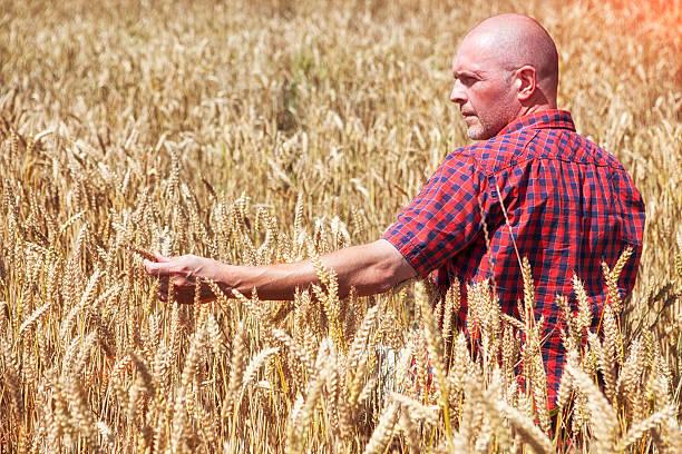 Modern Farming stock photo
