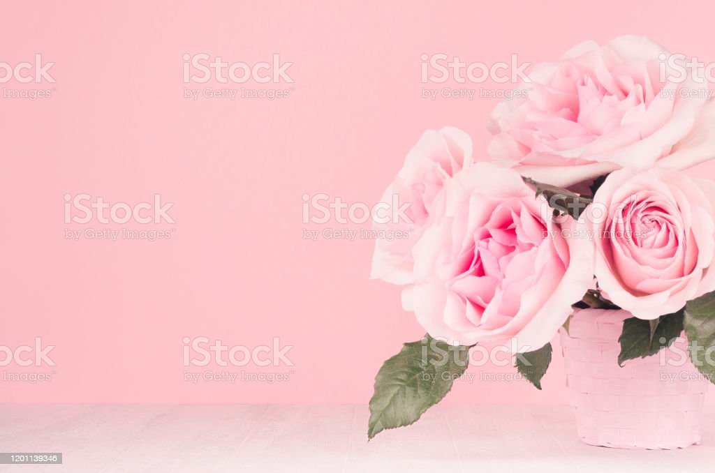 Modern Fashion Home Interior In Elegant Style And Pink Color Rich Lush Roses In Basket On White Wood Board Copy Space Closeup Stock Photo Download Image Now Istock