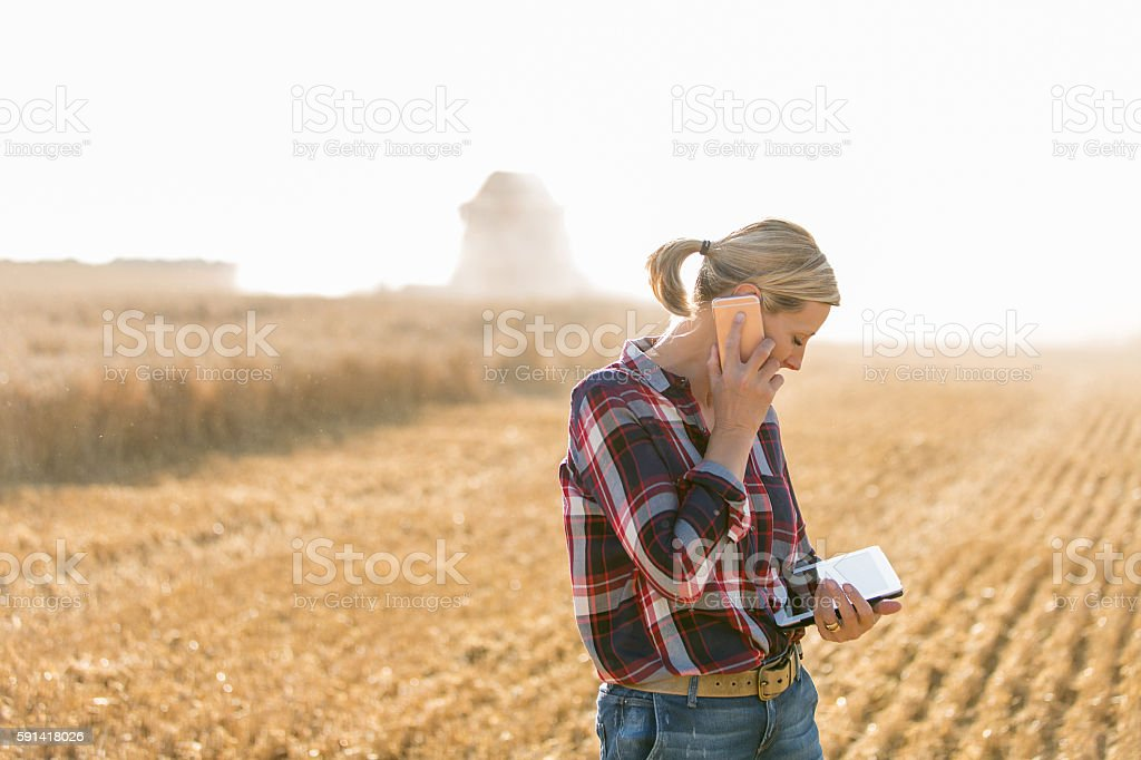 Modern female farmer with tablet on her wheat field stock photo