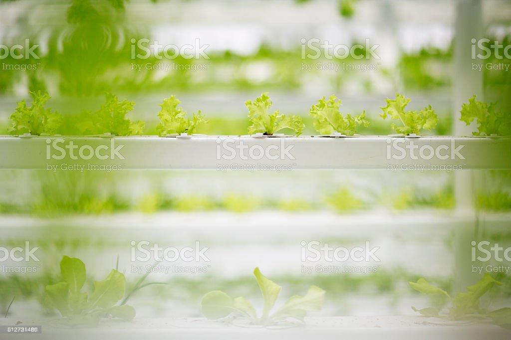 Modern Food Production stock photo