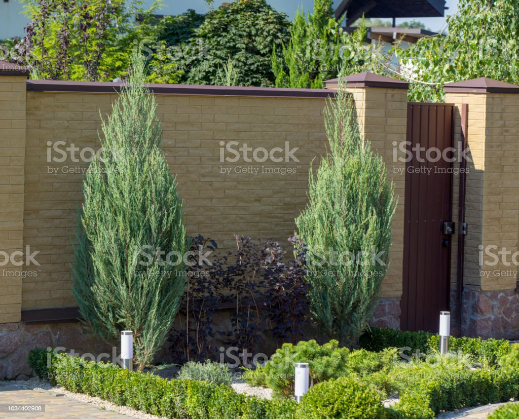 Modern Garden Design Coniferous Plants In The Garden Stock Photo Download Image Now Istock