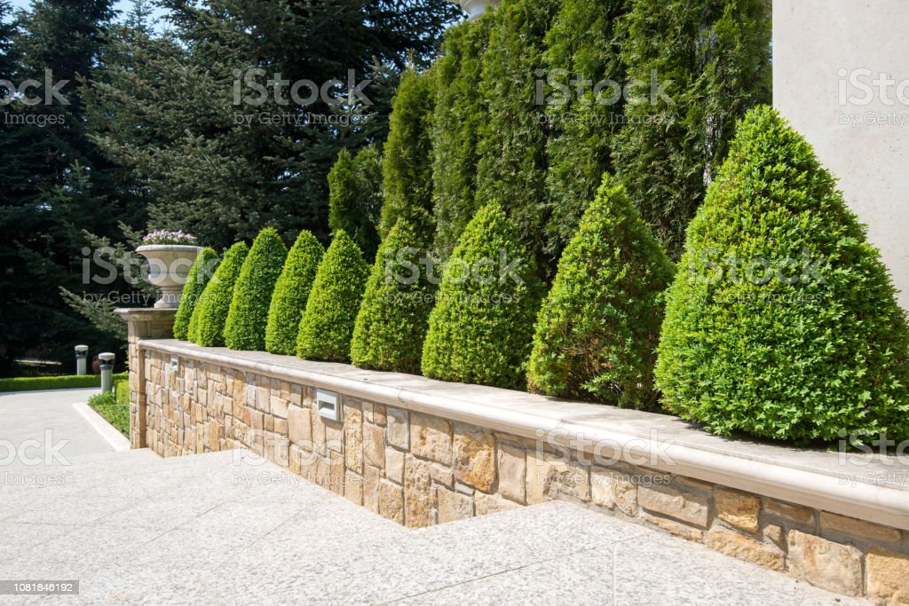 Modern Garden Design With Box Trees Bushes And Plants Near The