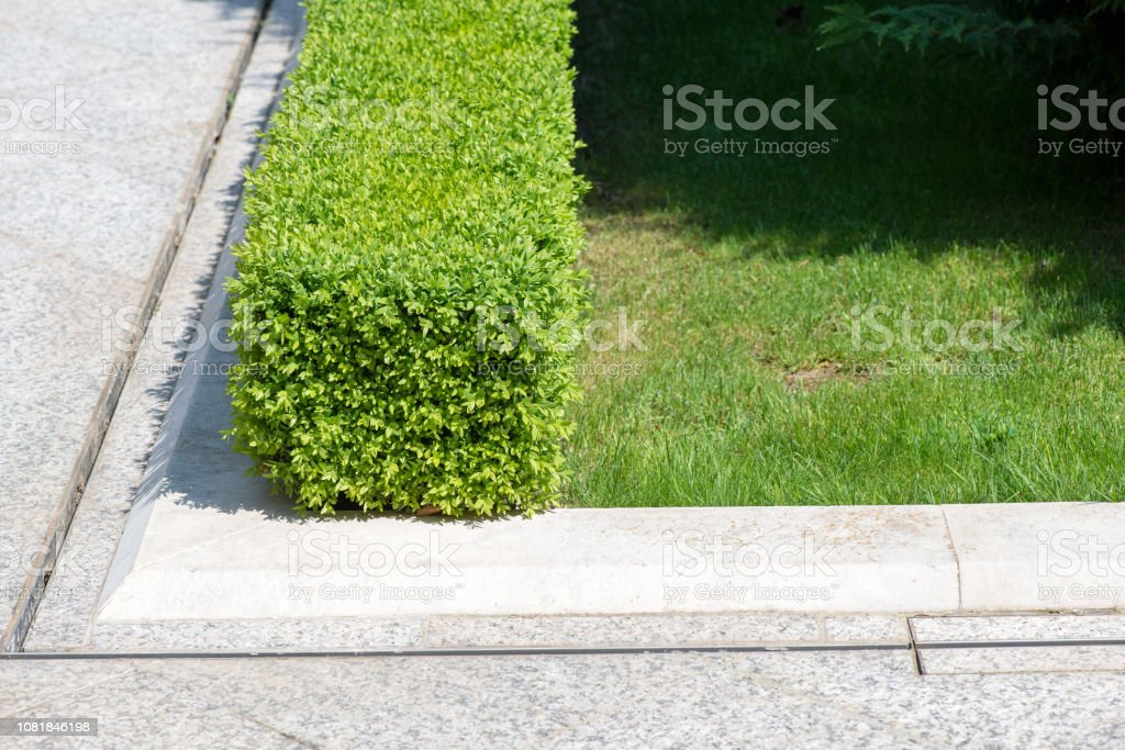 Modern Garden Design With Box Trees Bushes And Plants Near The Path Stock Photo Download Image Now Istock
