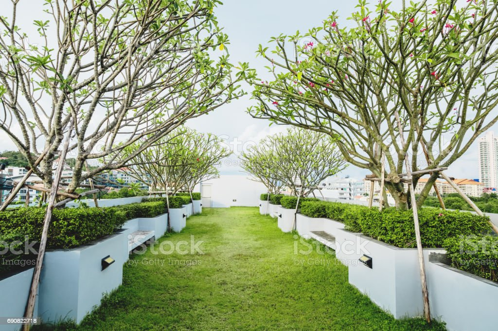Garten Baum Modern : Moderner Garten Auf Deck Dach Grünen Rasen Mit  Tropischer Baum