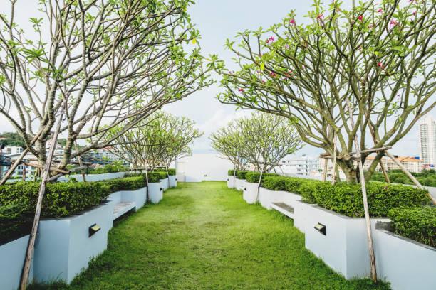 moderner garten auf deck dach, grünen rasen mit tropischer baum - dachgarten stock-fotos und bilder