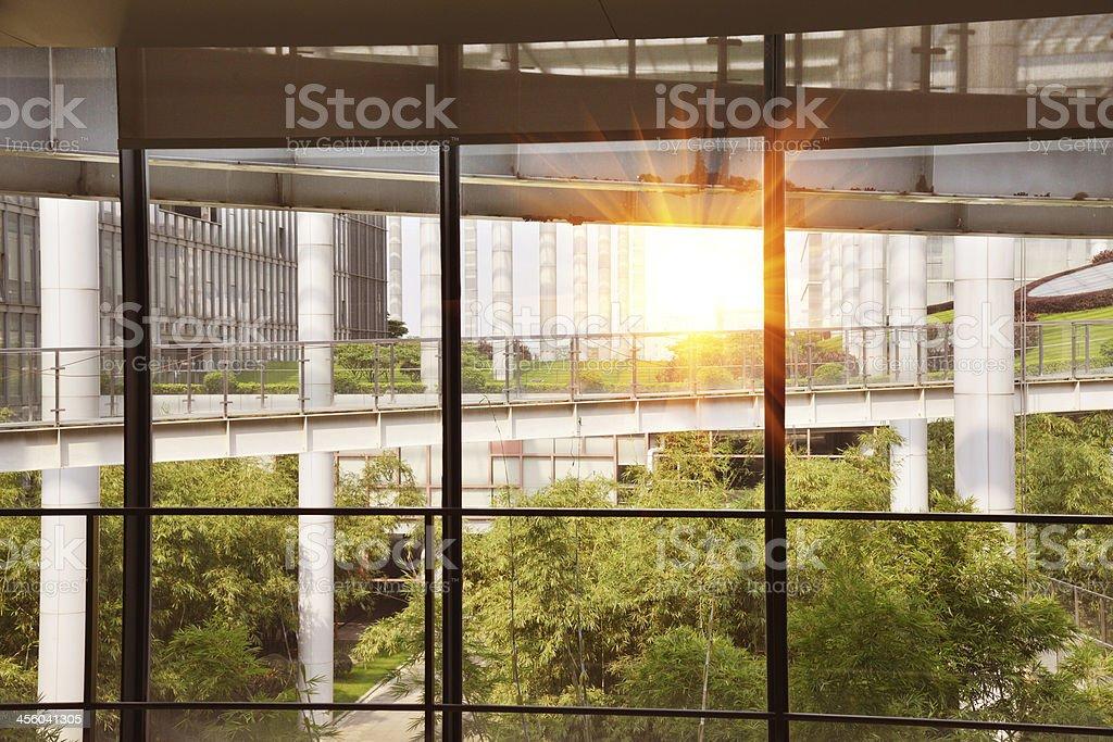 Modern office building with flourish green garden,view through window.