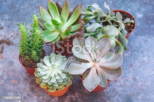 istock Modern green succulents, great design for any purposes. Nature background. 1263822291