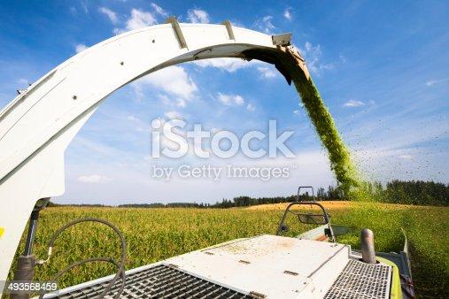 istock Modern harvester unloading green corn 493568459