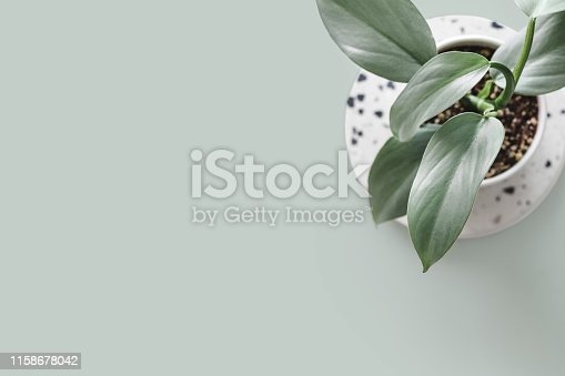Modern houseplants on a terrazzo board on a pastel green background, minimal creative home decor concept, top view with copy space, Philodendron Hastatum