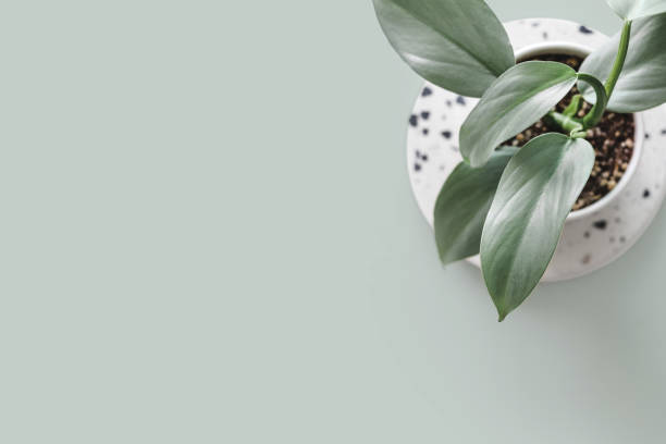現代室內植物 - 桌面拍攝 個照片及圖片檔