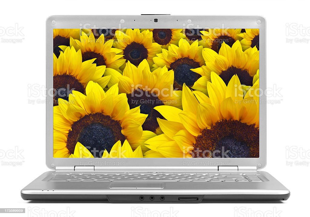 Modern Laptop Isolated with Sunflowers on Screen royalty-free stock photo