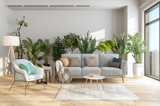Modern Living Room Interior With Potted Plants Behind The Gray Colored Sofa And Armchair.