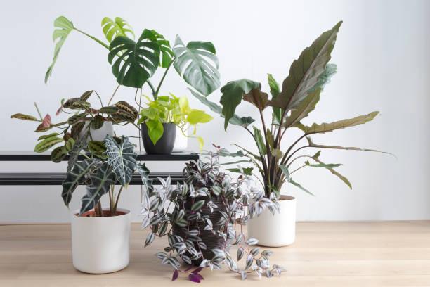moderne woonkamer met prachtige collectie van huis planten, indoor planten - kamerplant stockfoto's en -beelden