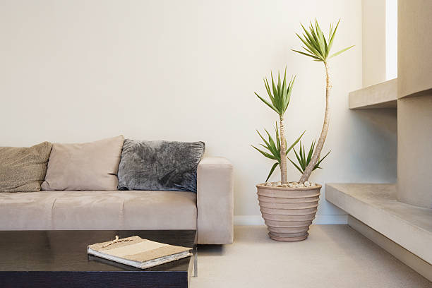 Modern living room with potted plant stock photo