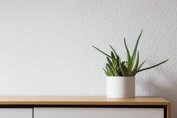 modern wohnen, saftigen auf sideboard - anrichte weiß stock-fotos und bilder