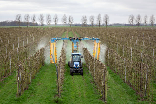 ASPEREN, THE NETHERLANDS - March 31, 2019: Modern orchard sprayer spraying insecticide or fungicide on his apple trees. ASPEREN, THE NETHERLANDS - March 31, 2019: Modern orchard sprayer spraying insecticide or fungicide on his apple trees. herding stock pictures, royalty-free photos & images