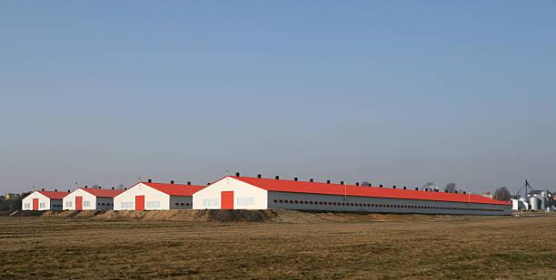 Moderne de volaille farms - Photo