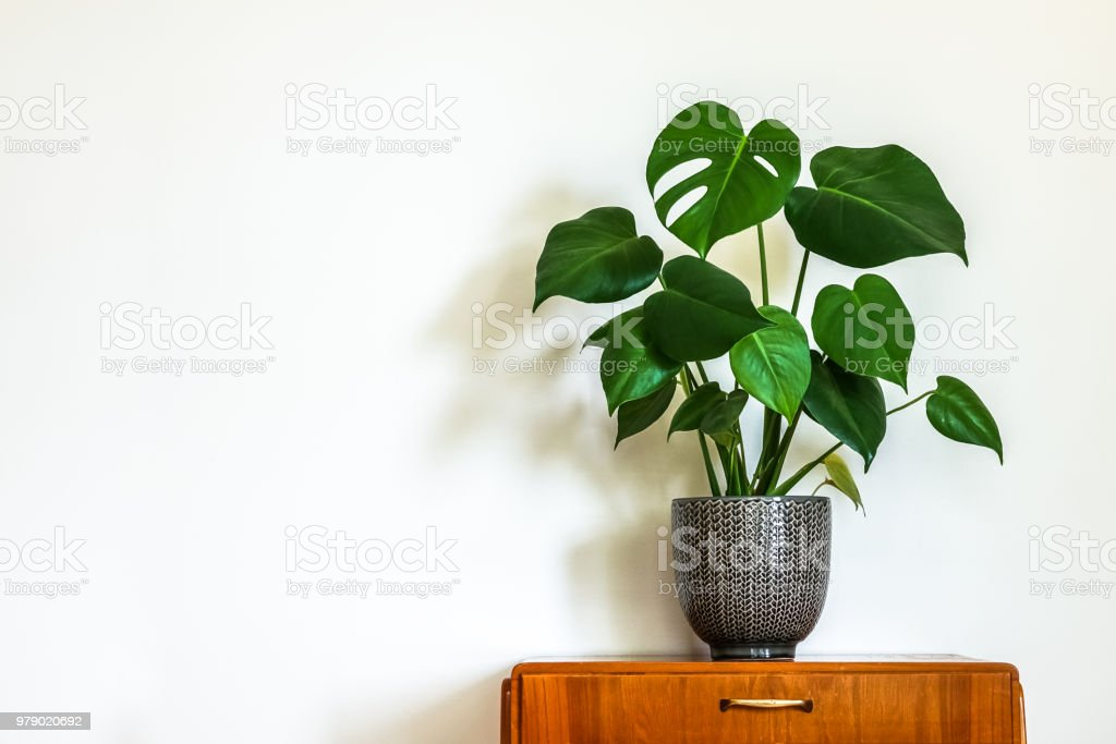 Modern retro interior with vintage table with a potted plant