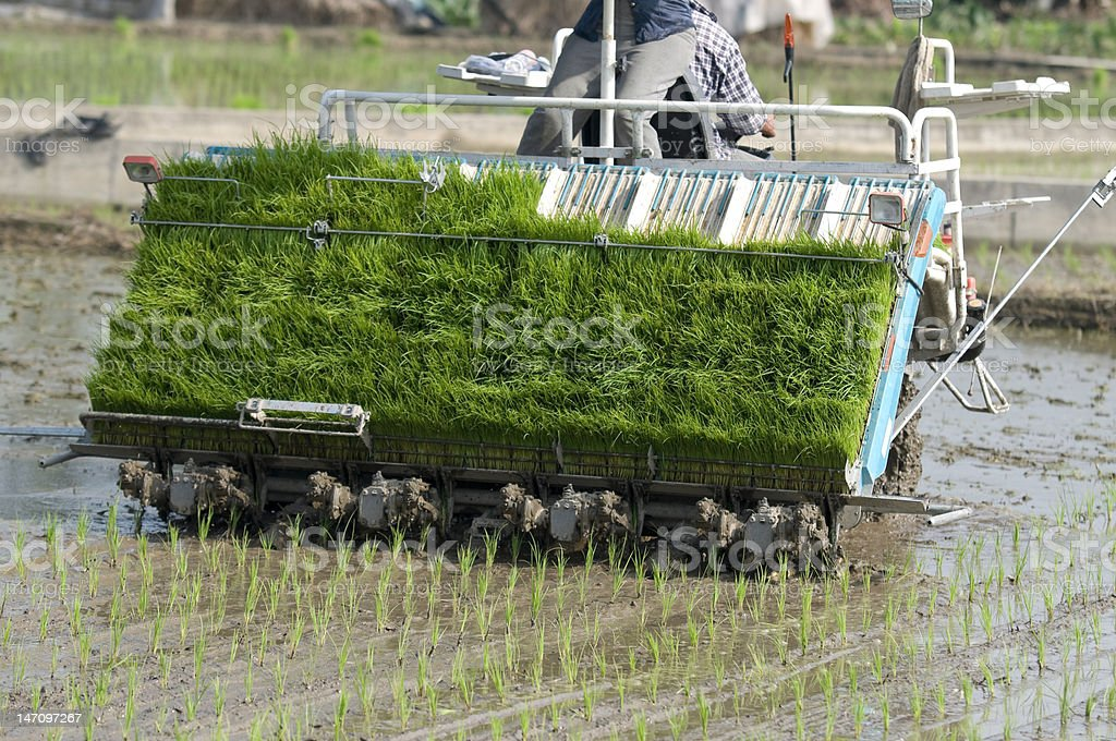 Modern Rice Planter in Taiwan royalty-free stock photo