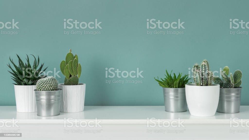 Moderne kamer decoratie collectie van diverse ingegoten cactus en