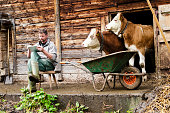 Social engineering. A modern and young Swiss farmer is observed by his cattle while using a digital tablet device. Shot during Lenklypse photo event in Switzerland.See also