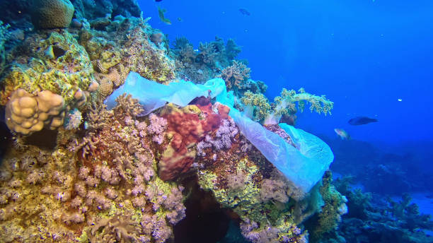 modern times symbol. plastic bag on the coral reef - ocean plastic stock pictures, royalty-free photos & images