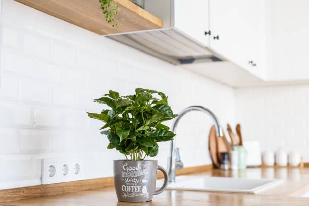 Moderne weiße Küche skandinavischen Stil – Foto