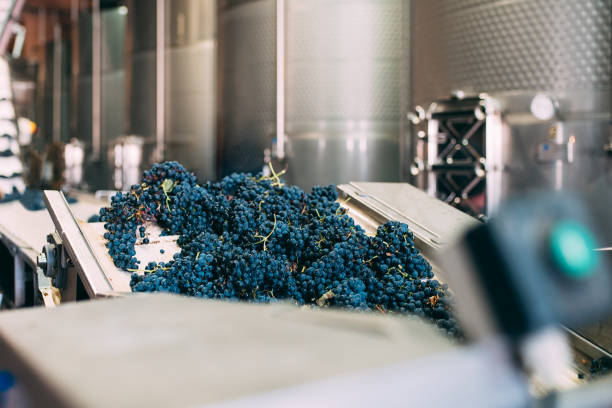 Modern winery machine with grapes stock photo