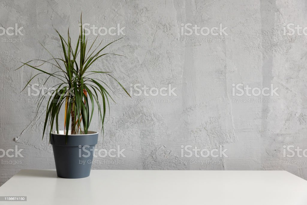 Modern work table with green plant in grey pot in home office studio....